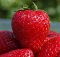 strawbry
